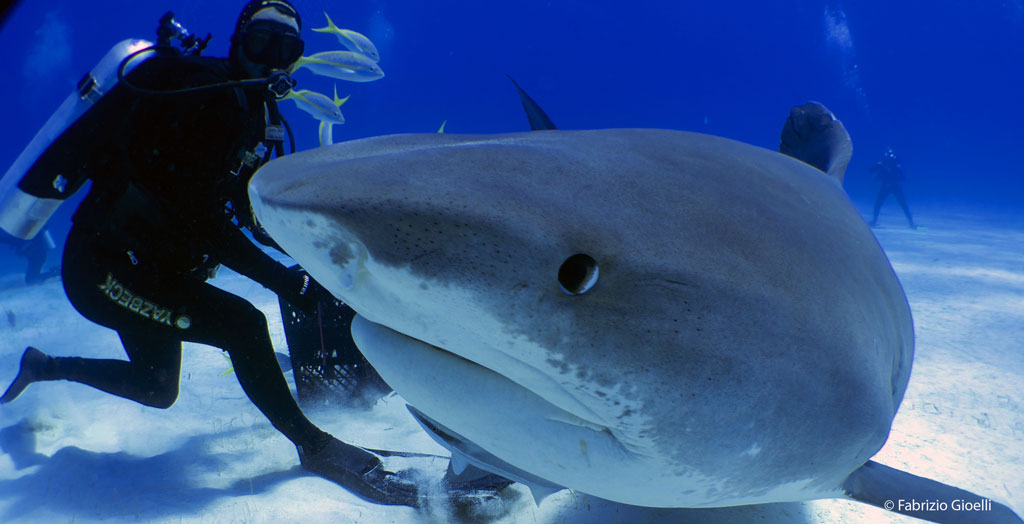 guide-requin-professionnel
