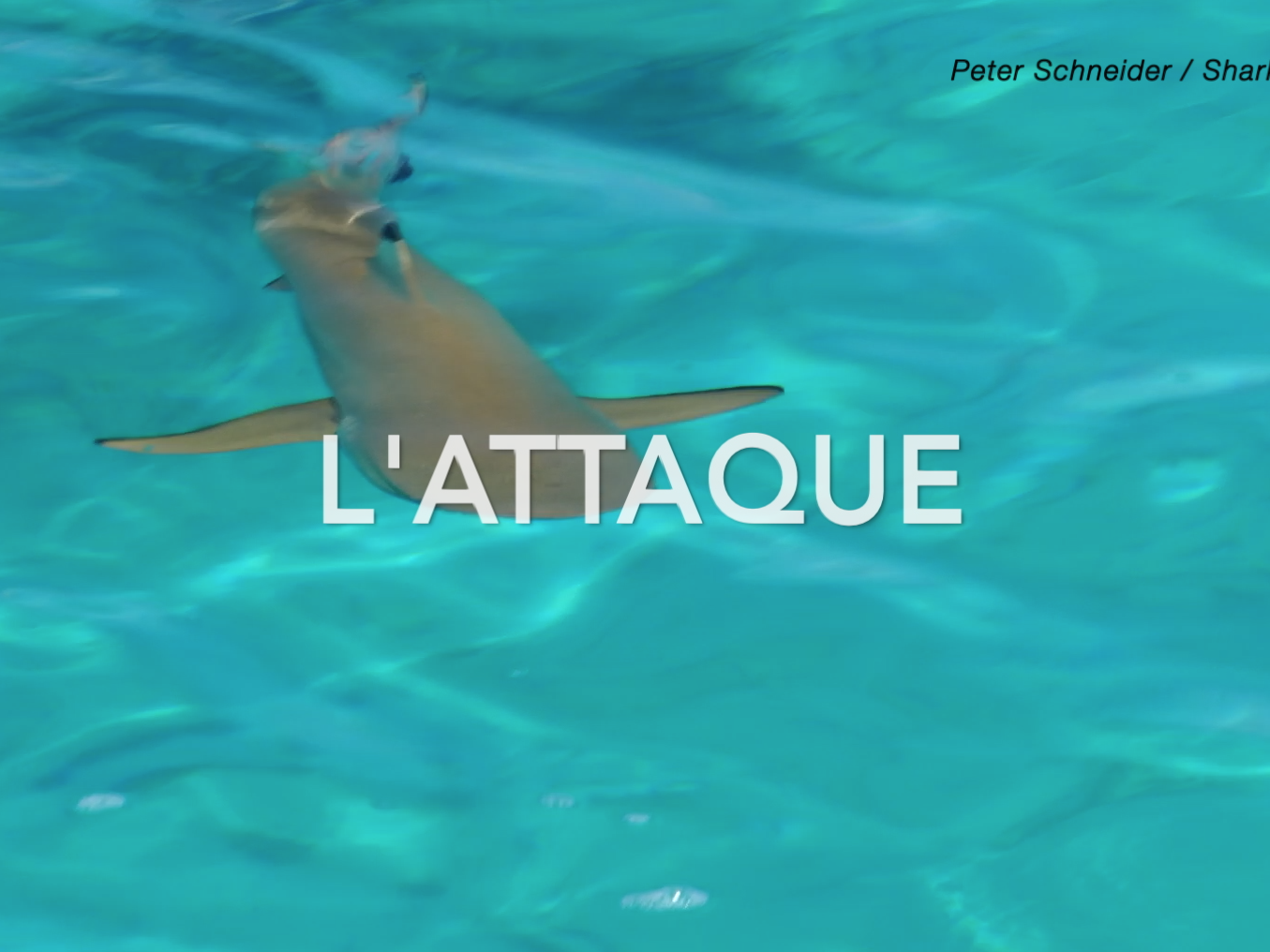 Attaque d'un requin filmée en direct!